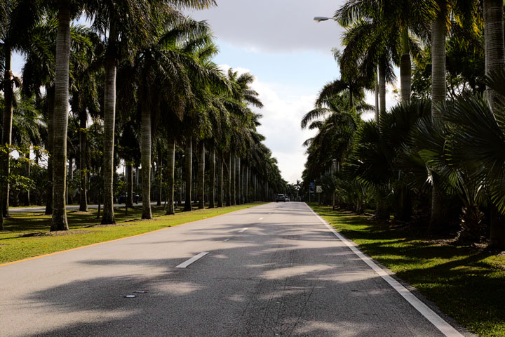 road lined with palm trees, Florida